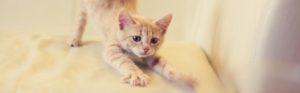 griffes de chat sur canapé